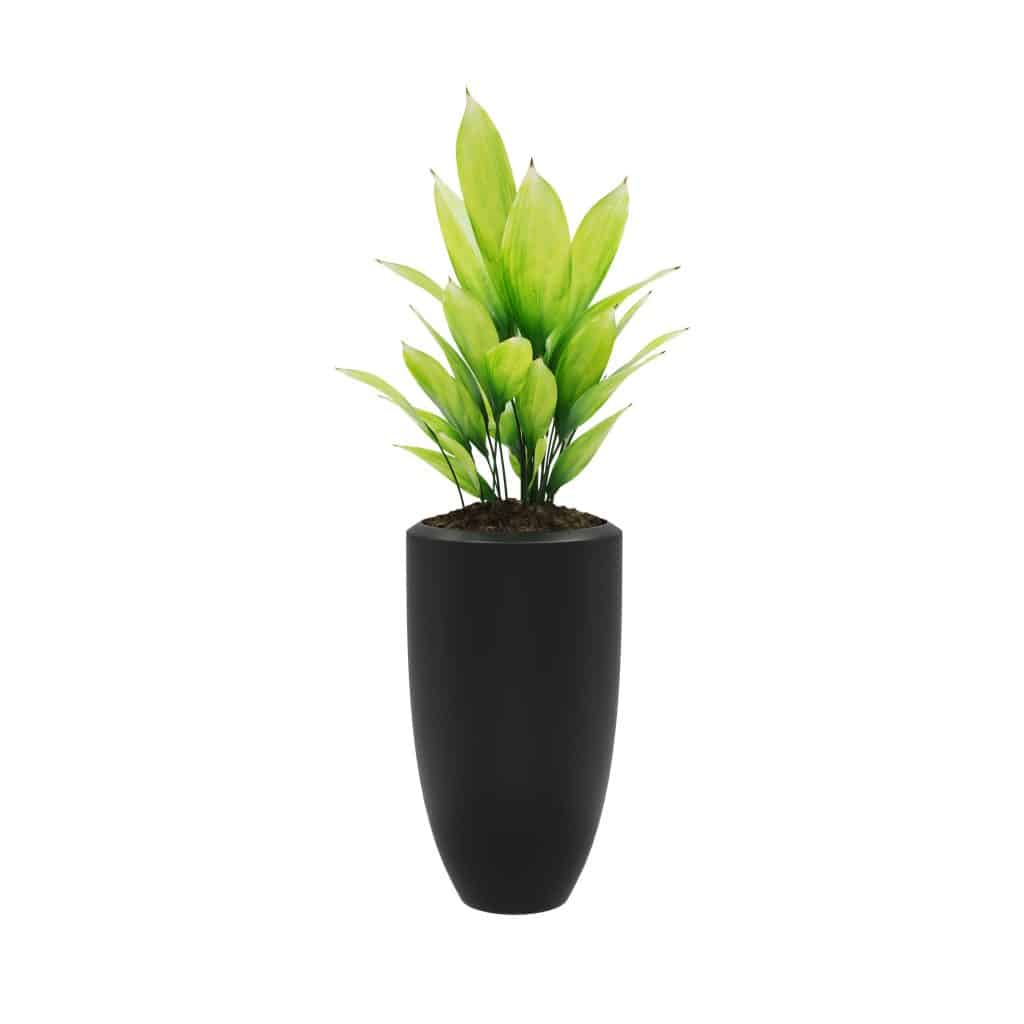 easy-care indoor cast iron plant with bright green leaves in a black planter with a white background