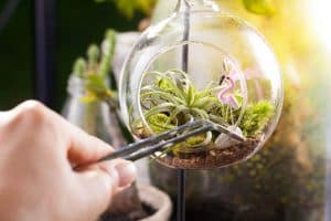 easy-care indoor air plant in a small atrium showing a hand with tweezers adjusting the plant